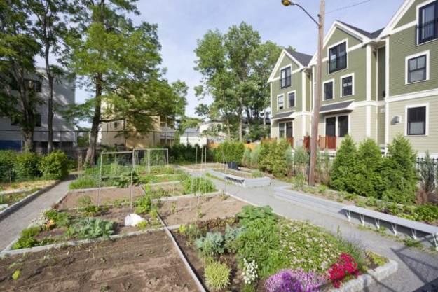 Photo l'actualité : Les jardins partagés